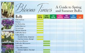 bloom times guide to and summer bulbs longfield gardens