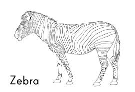 Image Of Zebra Coloring Book Pages