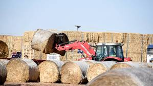 Burrumbuttock Hay Runners Make Hay Deliveries Direct To Cunnamulla ... Rapid Relief Team Hay From Tasmania To Local Farmers Goulburn Post Trucks Wagon Lorry Rig Tractors Hay Straw Photos Youtube Hay Trucks For Hire Willow Creek Ranch Hauling Bales Hi Res Video 85601 Elk161 4563 Morocco Tinerhir Trucks Loaded With Bales Of Stock Wa Convoy Delivers Muchneed Droughtstricken Nsw Convoy Heavily Transporting Over Shipping And Exporting Staheli West Long Haul As Demand Outstrips Supply The Northern Daily Leader Specialized Trailer On Wheels For Transportation Of Custom And Equipment Favorite Texas Trucking
