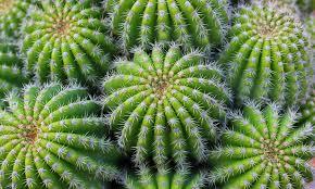 kaktus richtig pflanzen pflegen und vermehren das haus