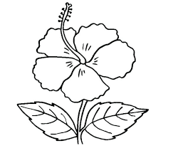 Free Flower Coloring Pages For Adults Mat Colouring