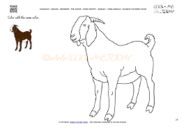 Example Coloring Page Billy Goat