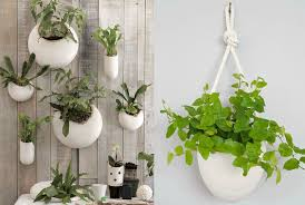 Good Plants For Bathroom by 28 Good Plants For Bathrooms Uk Apartment Plants Wall Sqm