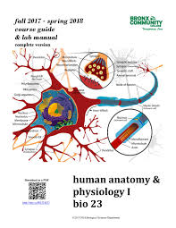 Bcc Cuny Help Desk by Bio23 F17 S18 Complete Course Guide By Human Anatomy Issuu