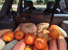 Pumpkin Patch Near Lincoln Il by Tickets For A Celebration Of Squash In Champaign From Showclix