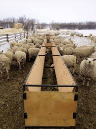 Sheep Bunk Feeder | Producer Profile: Catto Sheep Farm, Lipton, SK ... Britespan Building Systems Inc Fabric Buildings The Barn At Gibbet Hill Traditional Corsican Sheep Barns With Pool 10 Km From Porto Spherds Way Farms Build The Barns Grow Flock By Steven Acvities For Children High Park Shed Books Plan Choice Sheep Barn Plans Designs And Farm Structures Waterford Vermont Maremma Sheepdog Herding Finndorset Stone Center Youtube Horizon Prefab Shedrow Can Easily Be Adapted