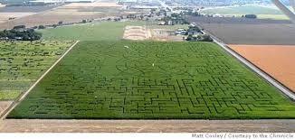 Pick Of The Patch Pumpkins Santa Clara by Take On The World U0027s Largest Corn Maze At Cool Patch Pumpkins In