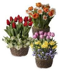 fill every month of the year with spectacular floral displays our