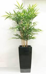 entretien des bambous en pot bambou en pot entretien thefacehome