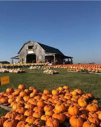 Pumpkin Patch College Station 2014 by Pumpkin Patch And Barn At Faulkner Farm Santa Paula California