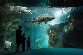 hithéâtre des requins aquarium la rochelle picture of