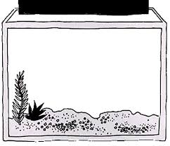 Pin Aquarium Clipart Coloring Page 2