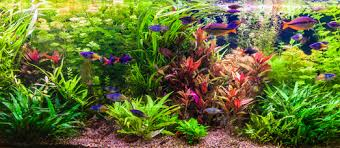 which fish species should i add to a freshwater nano aquarium how