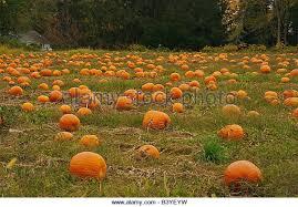 Pumpkin Patch Massachusetts by North America Usa Massachusetts Deerfield Stock Photos U0026 North