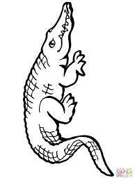 Click The American Alligator Coloring Pages To View Printable
