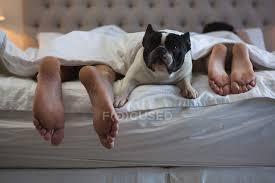 paar liegt mit hund im heimischen schlafzimmer im bett