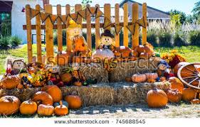Pumpkin Patch Pasadena Tx by This Pumpkin Patch There Scarecrow Straw Stock Photo 102083323