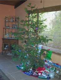 What Kind Of Trees Are Christmas Trees by Sierra Vistas A Charlie Brown Christmas Tree