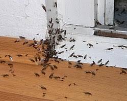 bekämpfung ameisen ameisenwiki