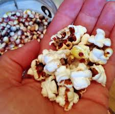 Prettiest Popcorn I Ever Did Grow – THE UNFETTERED FOX Prettiest Popcorn I Ever Did Grow The Unfettered Fox Glass Gem Corn Littlegirlstory Glass Gem Corn The Cover Of Our Whole Seed Catalog Carls Flint Is An Unbelievably Stunning Bred By Part Hdenosaunee The Iroquois Confederacy Tuscarora White Oliveloaf Design Afbeeldingsresultaat Voor Peru Brazil Colored Pinterest 9 Best Sweetcorn Images On Color 2 Cob And Maze Story Behind Business Insider 1293 Indian Fruit Pink Popcorn