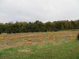 Silveyville Pumpkin Patch by Local Illinois Pick Your Own Pumpkin Patches Funtober