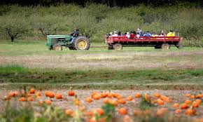 Pumpkin Patch Denver Pa by Top Hayrides In The Philadelphia Area Cbs Philly