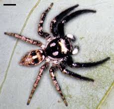 16 Spiders You Might Run Into In Southeastern Louisiana | NOLA.com Spiders At Spiderzrule The Best Site In World About Spiders 5 Venomous Found Colorado Outthere 109 And Webs Images On Pinterest Nature Ohios Biting Spidersrule The Barn Spider Pets Cute Docile Bug Eric Sunday Western Spotted Orbweaver Araneus Gemmoides Wikipedia Poisonous Georgia