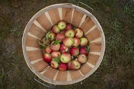 Best Pumpkin Apple Picking Long Island Ny by Great Places To Pick Apples On Long Island Newsday