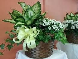 Send Flowers to San Antonio TX Arthur Pfeil Florist in San