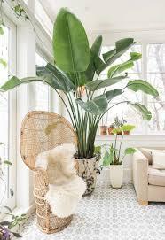 großblättrige pflanzen bringen eine dose exotik in den