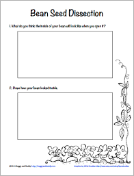 Life Cycle Of A Pumpkin Seed Worksheet by Dissect A Bean Seed Science Invitation Saturday