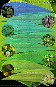 Edible Wild Plants Printable Poster | Edible Wild Plants, Free ... Southern Forager Spring Edible Plants In Middle Tennessee Eating The Wild Your Backyard Fixcom Landscapes Think Blue Marin Gulf Coast Gardening For Weeds And You Can Eat Remodelaholic 25 Garden Ideas Backyards Amazing Uk Links We Love Planting Plant Landscaping Sacramento Landscape Blueberries Raspberriesplants For Your Summer Guide Oakland Berkeley Bay Area Paper Mill Playhouse Yard2kitchen 197 Best Edible Wild Plants Images On Pinterest Survival Skills