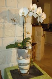 cache pot pour plusieurs orchidées l atelier des fleurs
