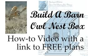 Build An Owl Nest Box | This Home-Studio - YouTube Barn Owl Box Company Wildlife San Francisco Forest Alliance Food Lodging Owls See A Housing Boom In Walla Washington Audubon Best 25 Owls Ideas On Pinterest Beautiful Owl And Utah Nest Box 2 Youtube There Is Always One That Ruins Family Picture Trio Family Ties Chicks Let Their Hungry Siblings Eat First Texas 2017 Update All About Birds Bring Up Baby How Barn Do It Help Clean Up Rodents Naturally Green Blog Anr Blogs