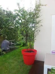 entretien des bambous en pot grands pots et conteneurs page 4 lesbambous fr forum des