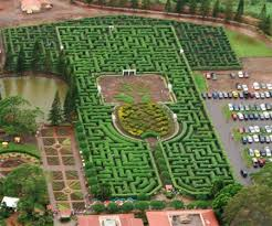 Dole Plantation in Oahu Hawaii See how the pineapples are grown
