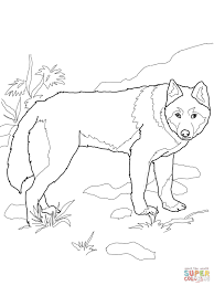 Intricate Dhole Animal Coloring Pages Dingo Wild Dog