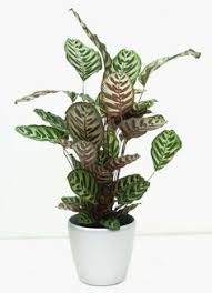 Best Plants For Bathroom No Light by Blog Plants Remodel Bathroom And House