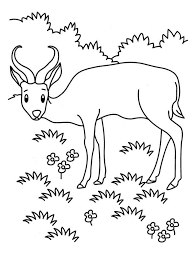 10 Images Of Printable Grassland Coloring Pages