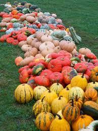 Hartsburg Pumpkin Festival 2015 Dates by 62 Best Heirloom Pumpkins Images On Pinterest Pumpkins Gourds