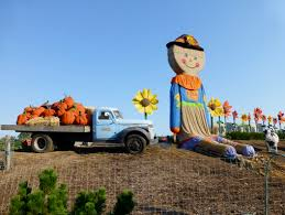 Pumpkin Picking Nj 2015 by Hayrides And Pumpkin Patches Fall Fun In The Philly Area Frugal