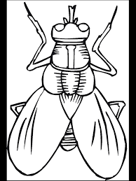 Insect Coloring Page Printable Bugs Bug Pages Primarygames Free Online