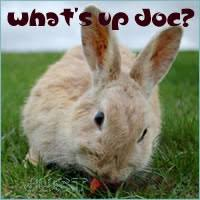 Can Bunny Rabbits Eat Pumpkin Seeds by Rabbits Diet What Can Rabbits Eat