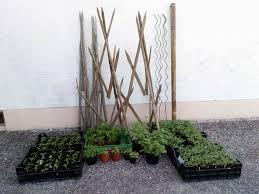 tomatenpflanzen paprikapflanzen spiralstäbe hoanzl stauden blumen