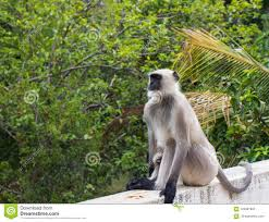 100 Zen Mode A Monkey In Zen Mode Stock Photo Image Of Wildlife 123281902