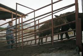 Complex World Of Border Trade: Cattle Go North, Meat South Life Inside Texas Border Security Zone Truck Sales Commercial Youtube I Wanted To Stop Her Crying The Image Of A Migrant Child That Trump Administration Ppares Build First Part Border Wall On Volvo Mcallenvolvo Mcallen 2018 Reviews Edinburg Tx Bert Crossing Stock Photos Home Facebook Rio Grande Valley Is Unusually Quiet As Southwest Crossings