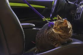 comment enlever l odeur d urine de chat de sa voiture