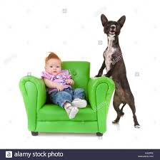 Black And White Mongrel Female Dog Stock Photos & Black And White ... Faux Suede Pet Fniture Covers For Sofas Loveseats And Chairs Comfort Research Big Joe Bagimals Dawson The Dog Bean Bag Armchair Shih Tzu Lap On The Stock Photo Image 350298 Dog Cat Chamomile Amazoncom Sure Fit Quilted Throw Sofa Slipcover Taupe King Sitting His Throne 1018169 Shutterstock Antique Asian Chair Chinese Export Wood Carved Dragon Lion Foo Me My Dogcat Fold Out Bed With Protector Available In Dogs Amazoncouk Boxer Destroyed A Leather Armchair Alone At Home Damaged Hound Buttonback Occasional Loaf