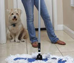 My Dog Pees On My Bed by Avoid Accidents How To Stop Your Dog In The House