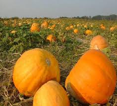 Kingsway Pumpkin Farm Hours by Dussel Farm Corn Maze Ohio Haunted Houses